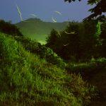自然豊かな和歌山はホタルがいっぱい!おすすめスポットベスト9!